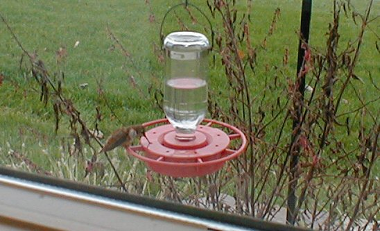 New Freedom, York Co. Hummer on feeder